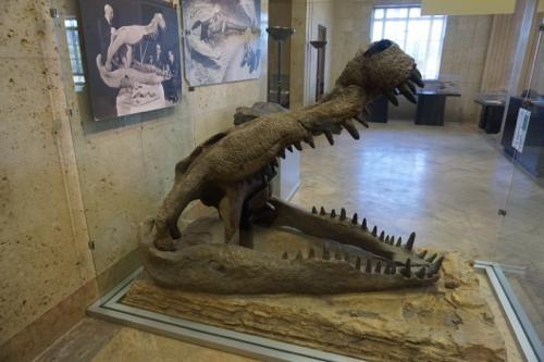 恐竜博物館.ダス.1