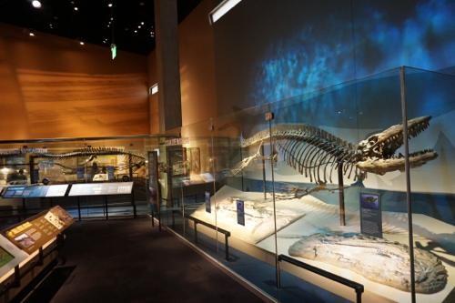 恐竜博物館.ダラス.ペロー.1
