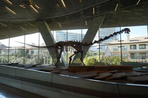 恐竜博物館.ダラス.ペロー.10