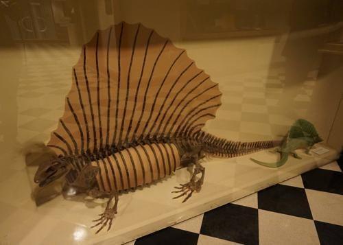 恐竜博物館.ダラス.ペロー.3