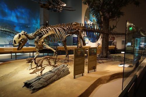恐竜博物館.ダラス.ペロー.4