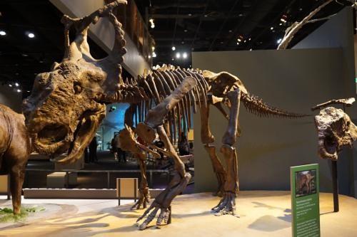 恐竜博物館.ダラス.ペロー.5.