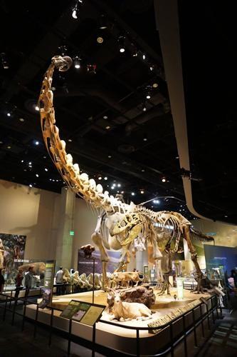 恐竜博物館.ダラス.ペロー.7