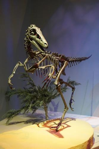 恐竜博物館.ダラス.ペロー.8
