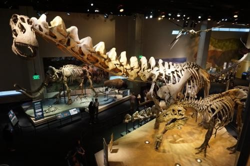 恐竜博物館.ダラス.ペロー.9