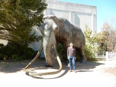 恐竜博物館.ダラス.2