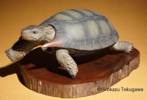 Anomalochelys.アノマロケリス.恐竜.古生物.フィギュア.模型.イラスト.2