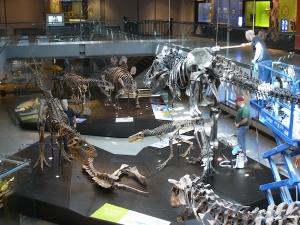 ロサンゼルス郡立自然史博物館恐竜1