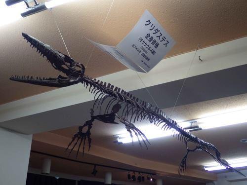 モササウルス.骨格.クリダステス