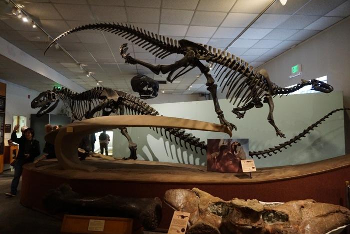 ■ブリガム・ヤング大学古生物博物館