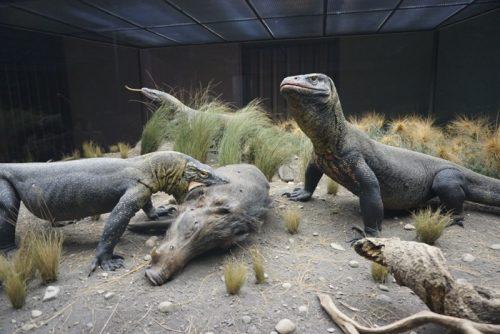 メガラニア Ark