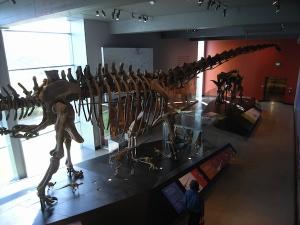 ロサンゼルス郡立自然史博物館恐竜2