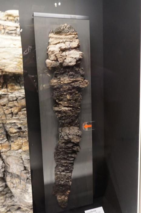 国立科学博物館・リニューアル展示 | ふらぎ雑記帳